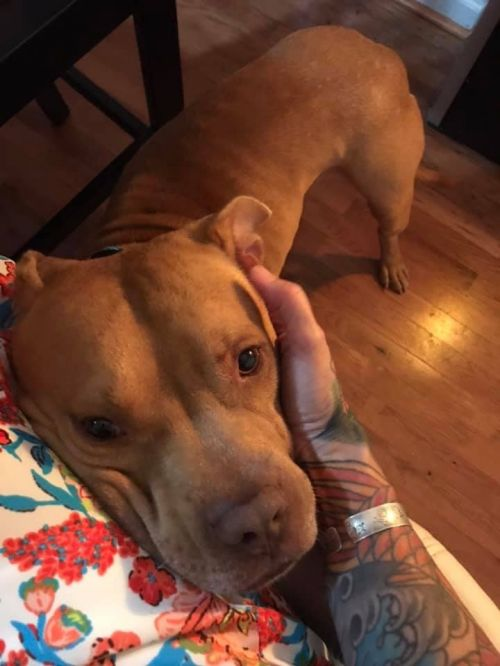 Three Paws Rescue - Billy