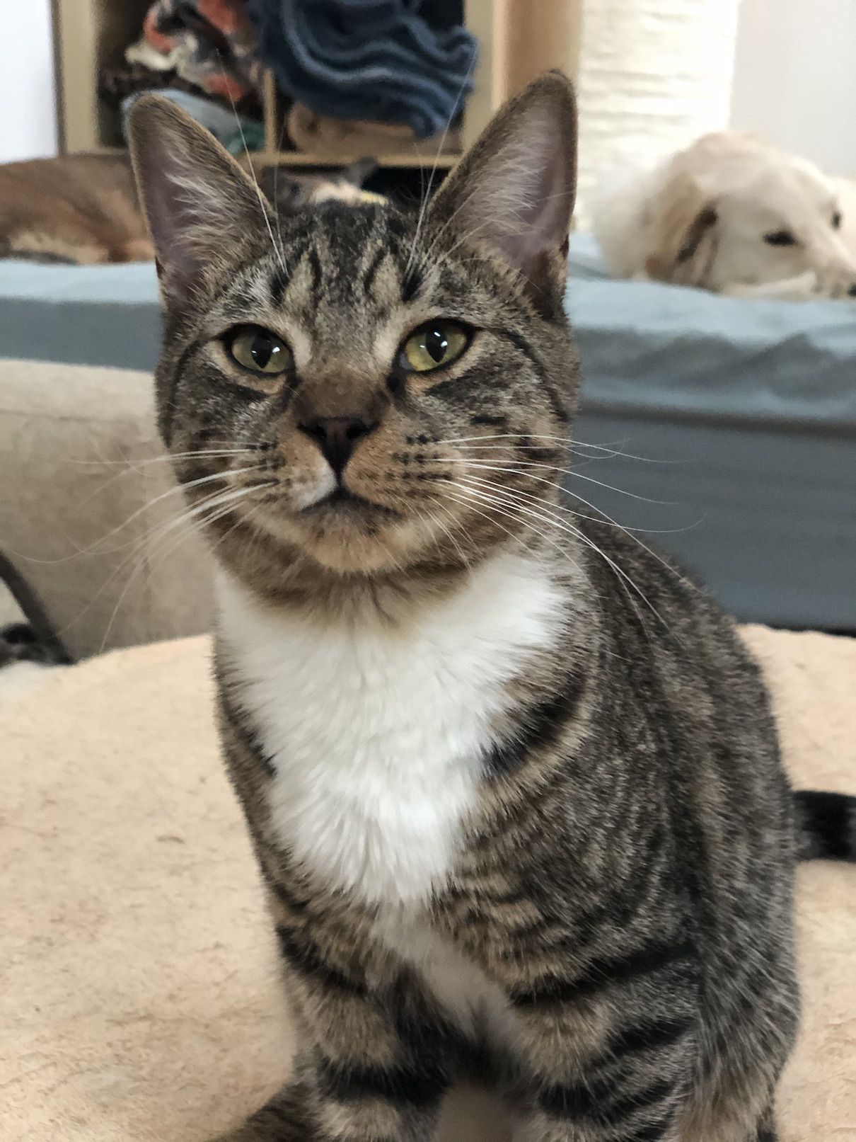 Three Paws Rescue - Muffin