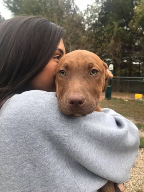 Three Paws Rescue - Thlema