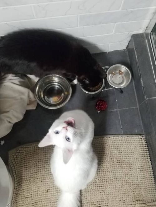 Three Paws Rescue - Alistar and Balthazar