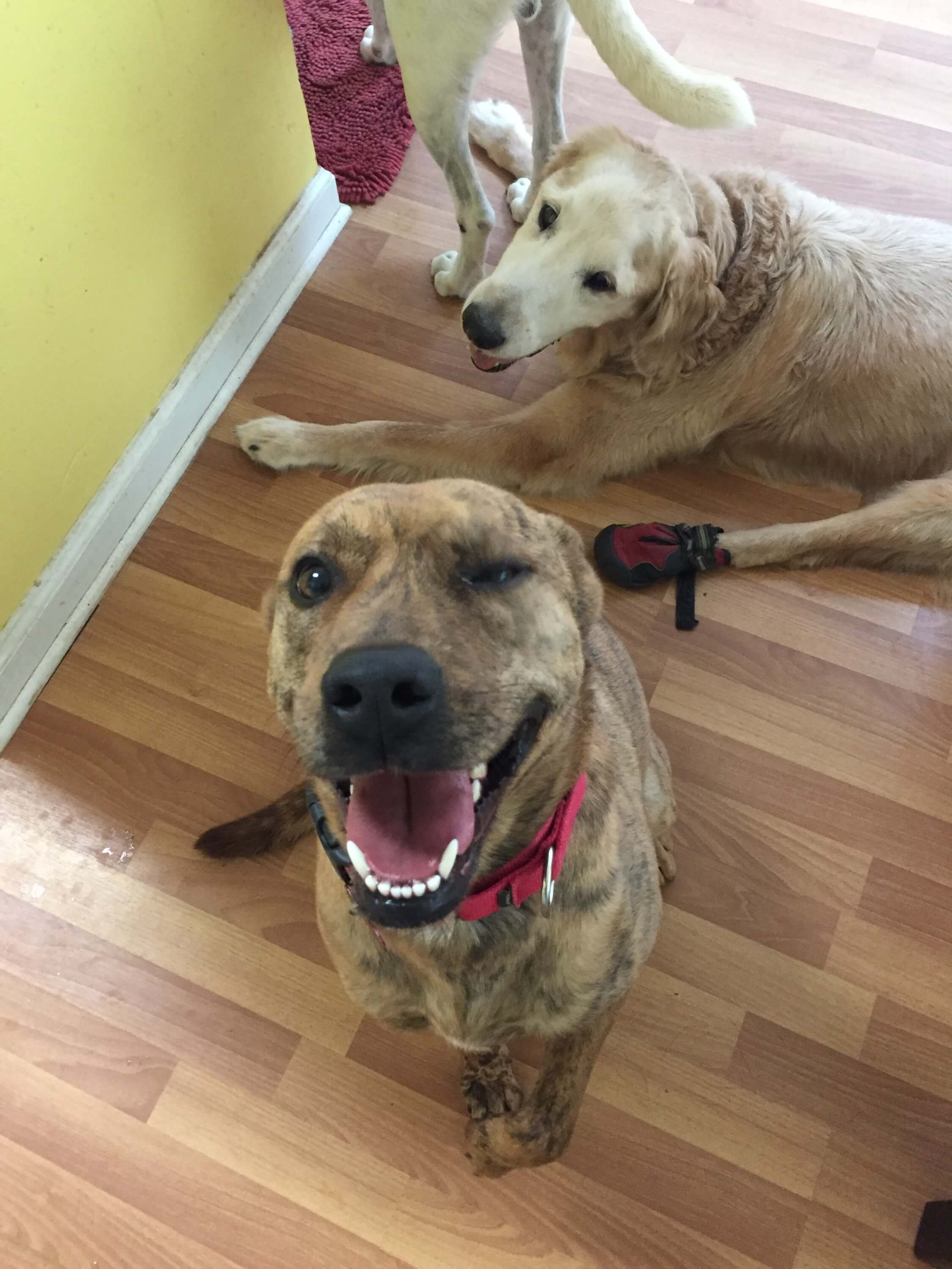 Two Tailz Rescue - Molly