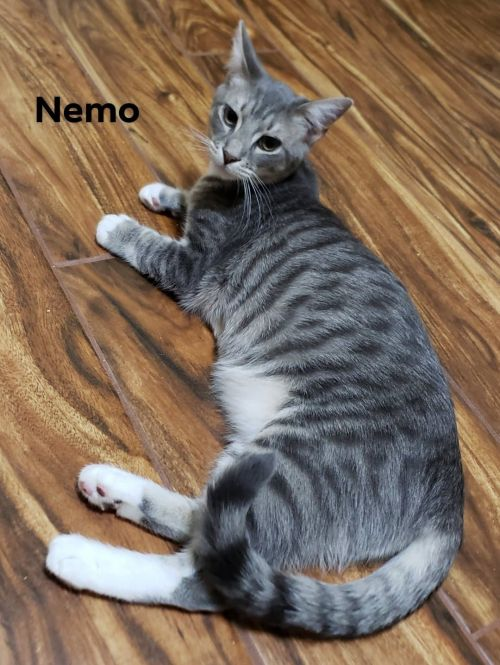 Three Paws Rescue - Nemo