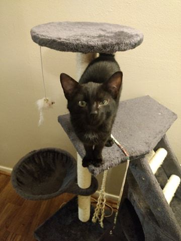 Three Paws Rescue - Binx