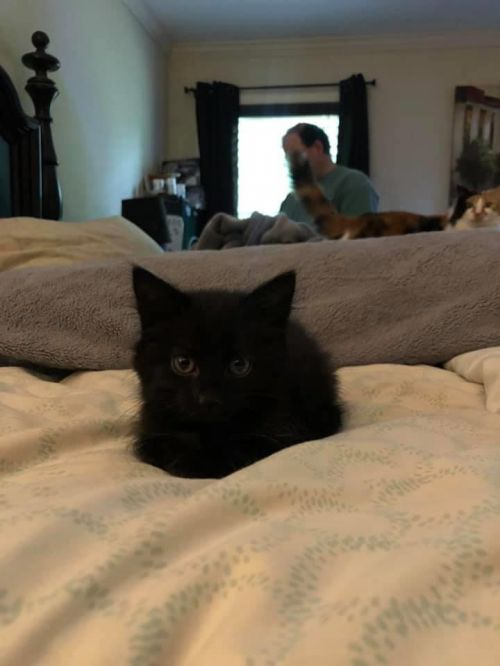 Three Paws Rescue - KITTENS! (You can adopt just one)