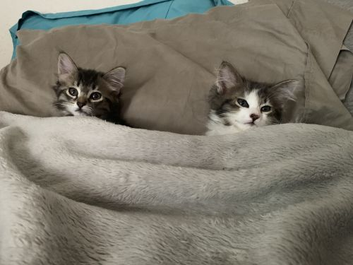 Three Paws Rescue - Muffin and Boo