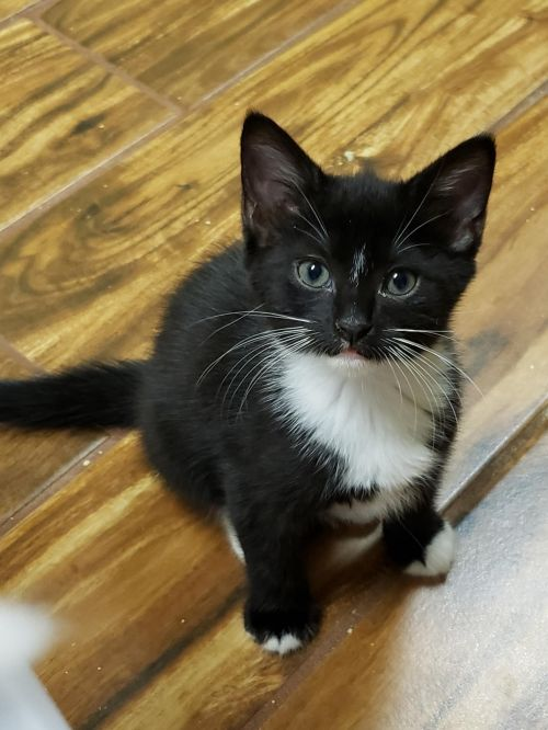 Three Paws Rescue - Toodles and Bumble