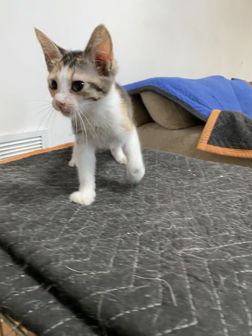 Three Paws Rescue - Clementine