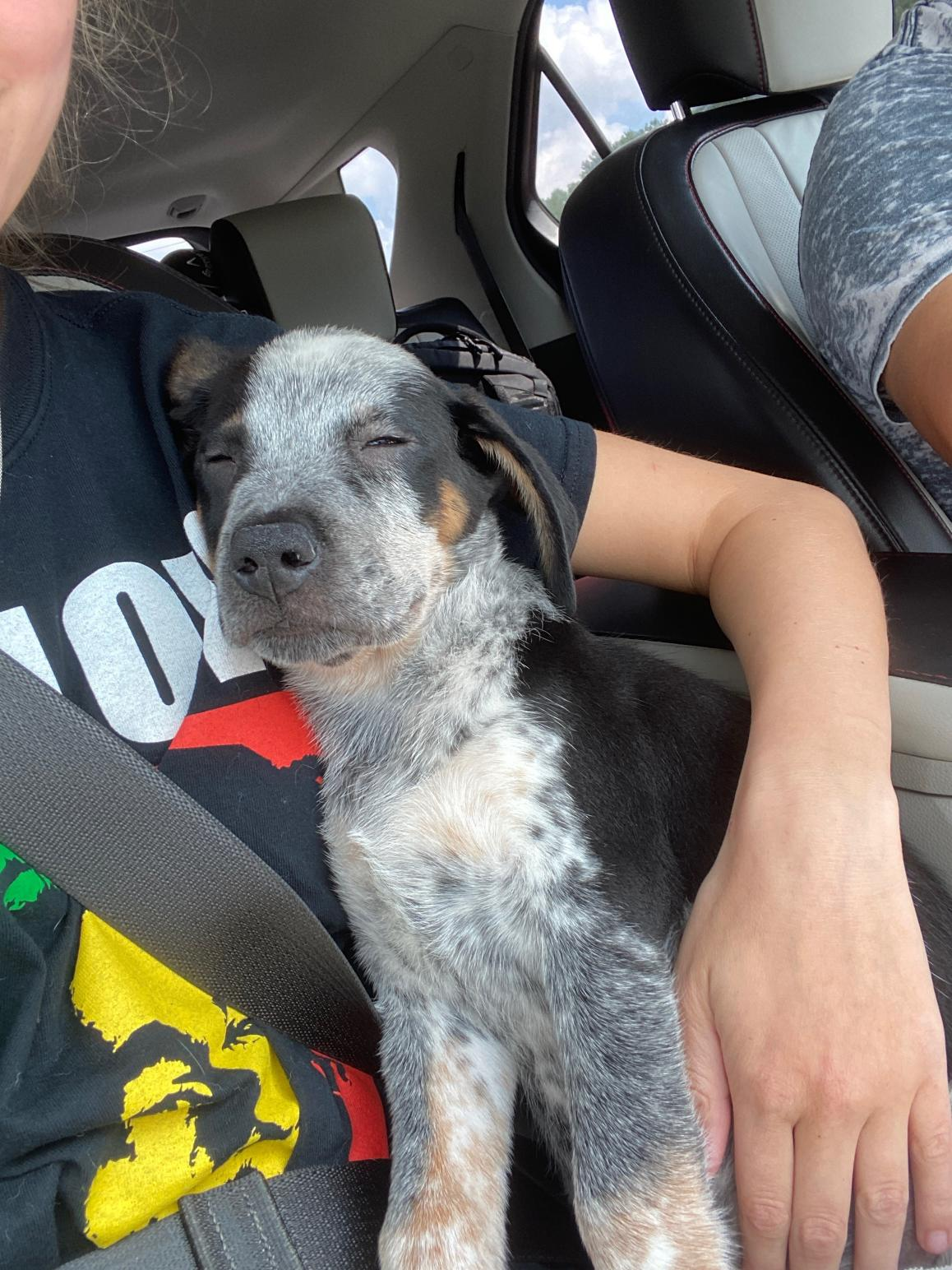 Three Paws Rescue - Spike