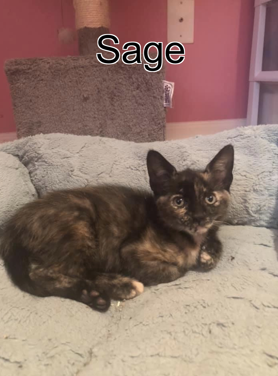 Three Paws Rescue - Sage