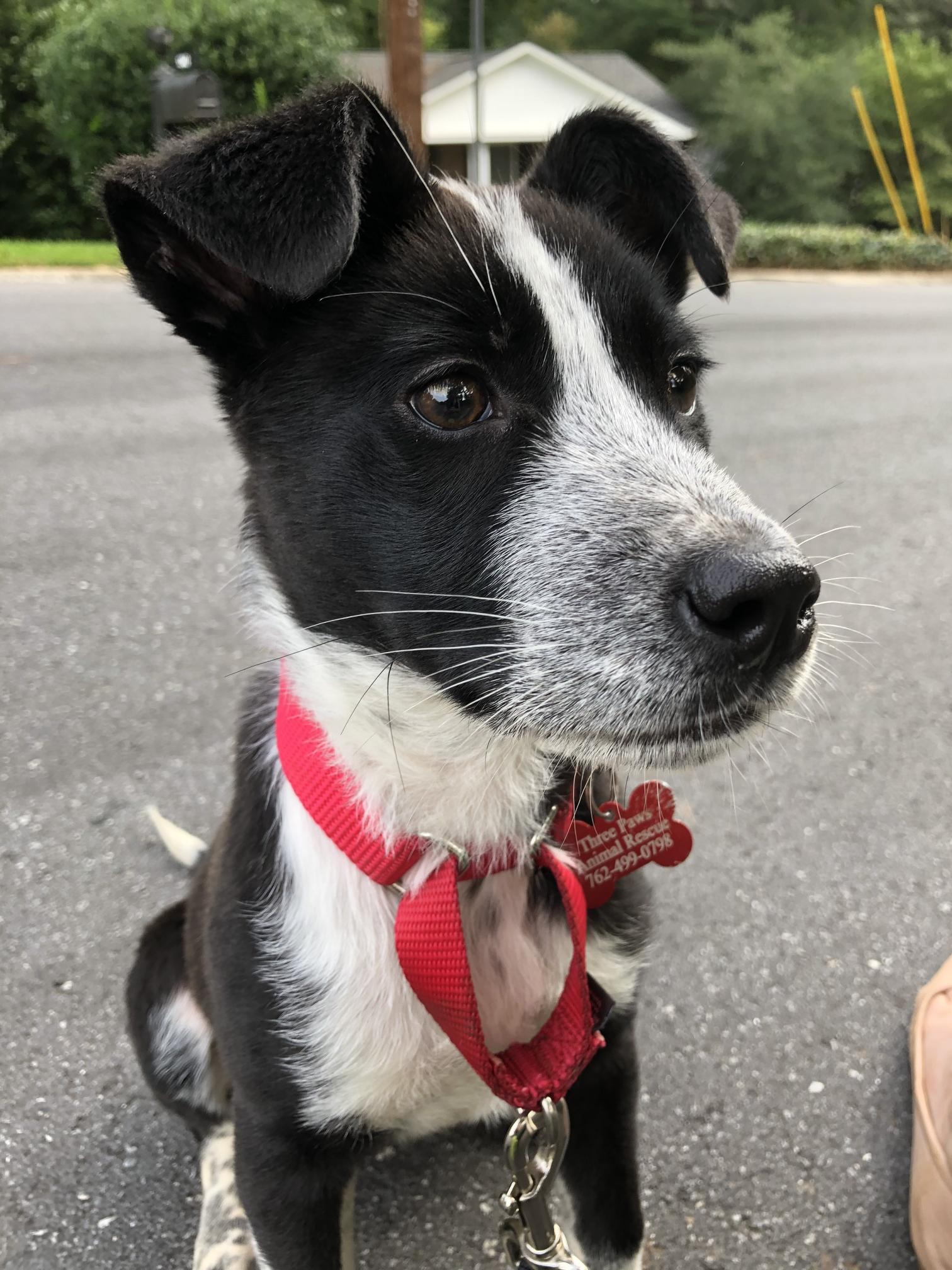 Three Paws Rescue - Summer
