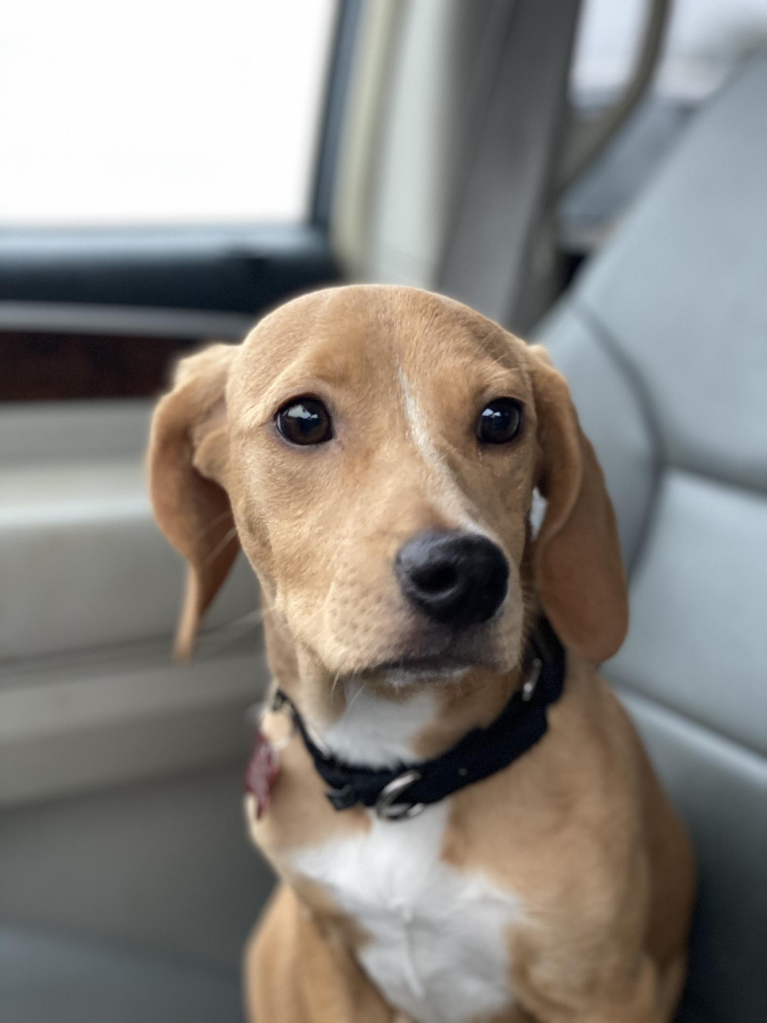 Three Paws Rescue - Violet