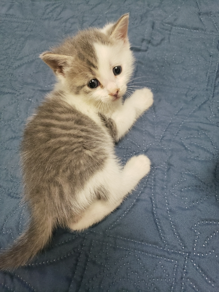 Three Paws Rescue - Cloudy