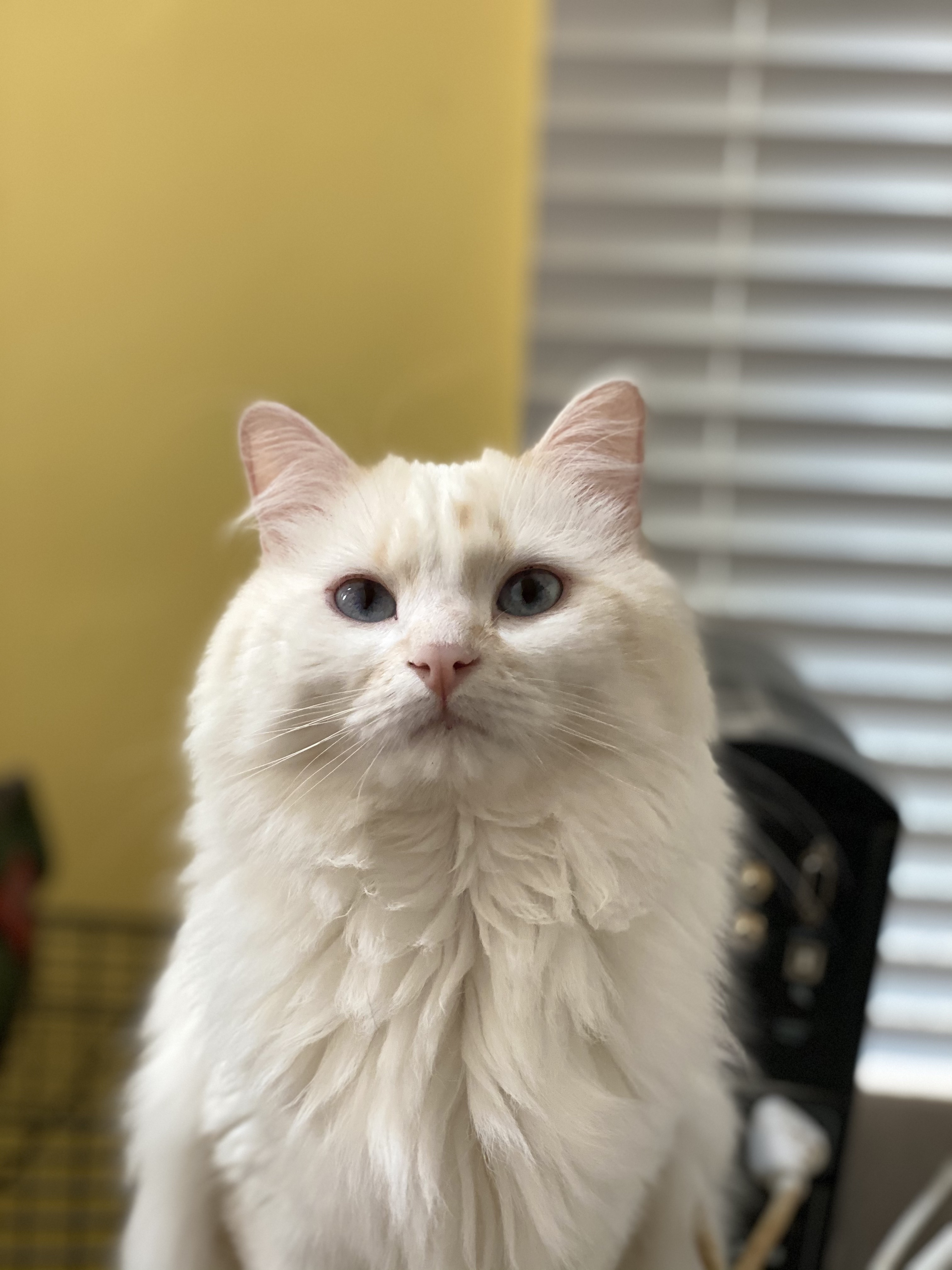 Three Paws Rescue - Oliver