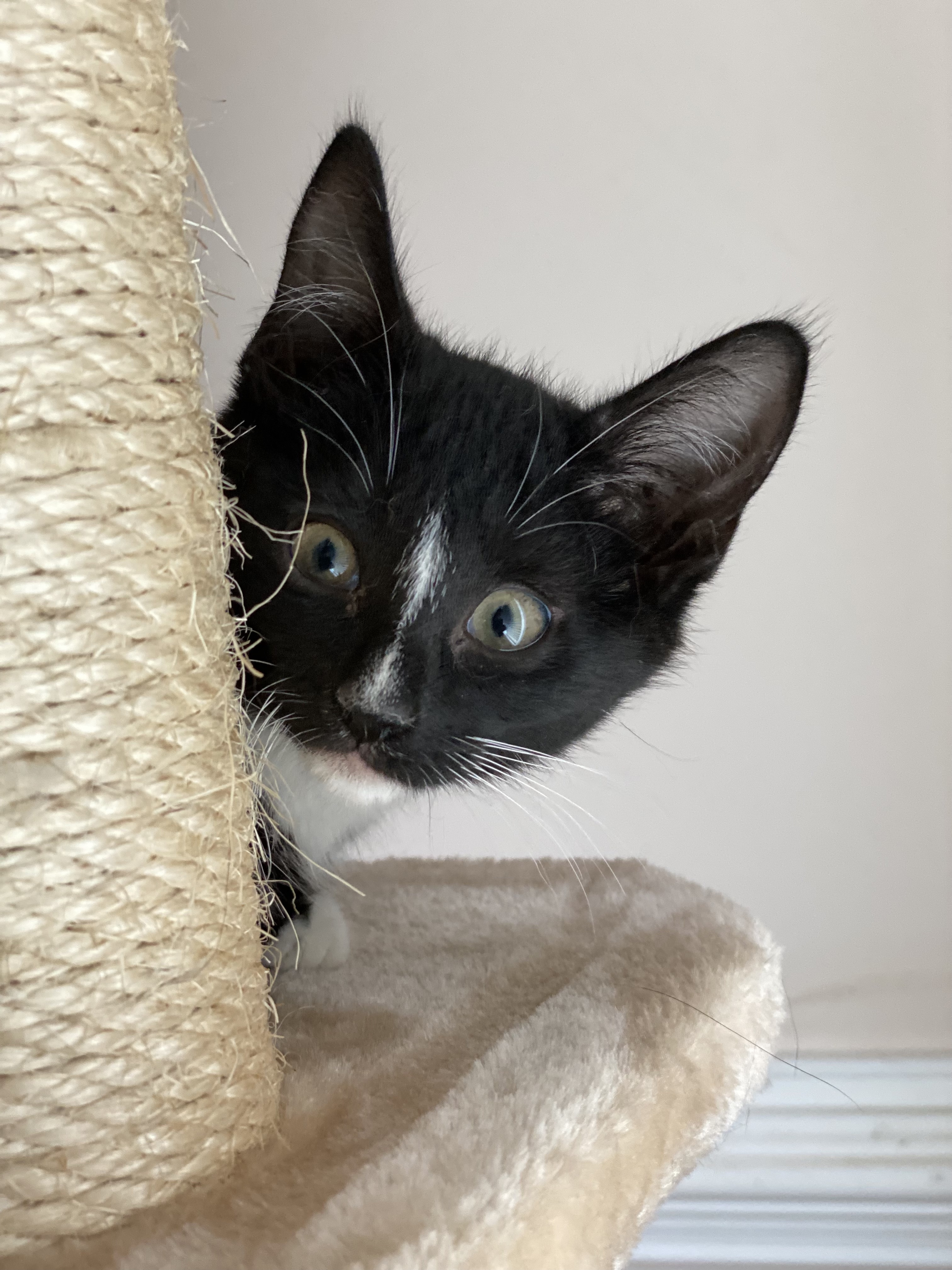 Three Paws Rescue - Fearless