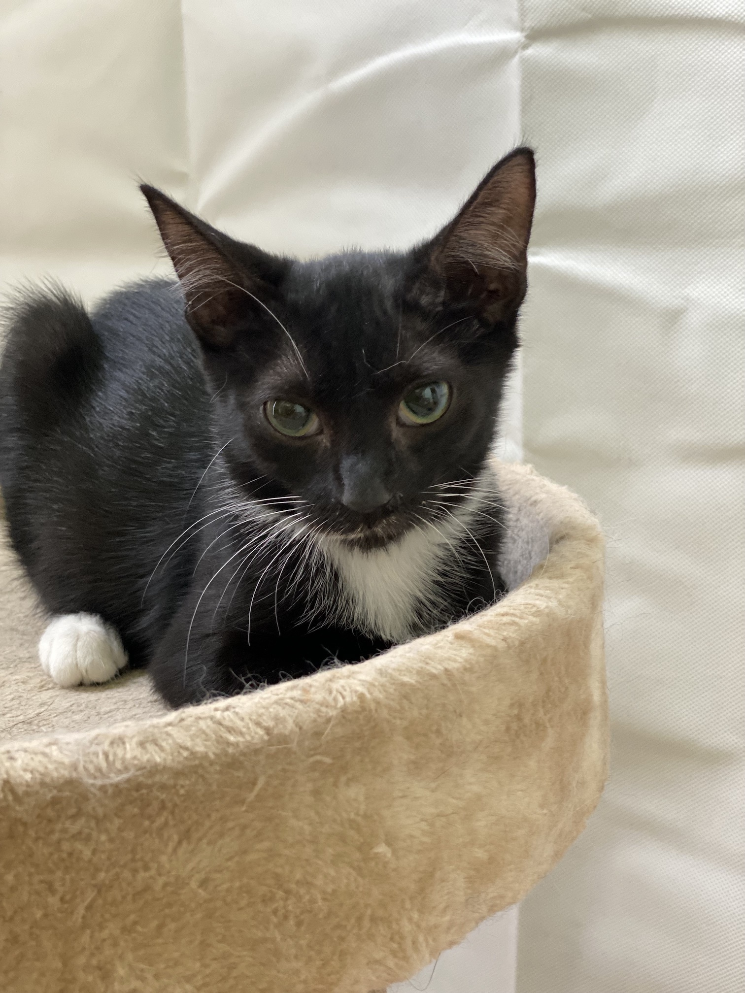 Three Paws Rescue - Lover
