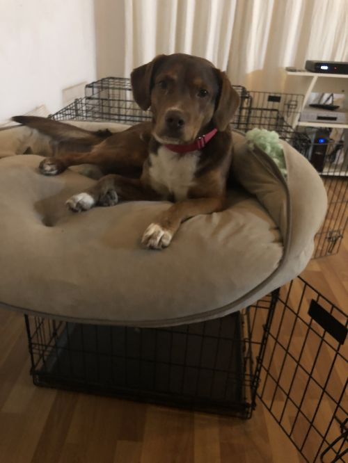 Three Paws Rescue - Buster (UGA dog)
