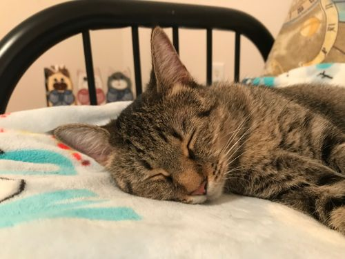 Three Paws Rescue - Vicky